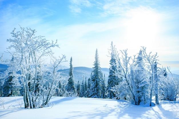 Paisagem bonita do inverno com árvores cobertos de neve. fundo de inverno