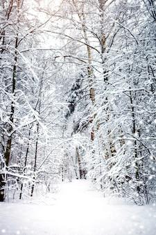 Paisagem bonita do inverno com árvores cobertos de neve.