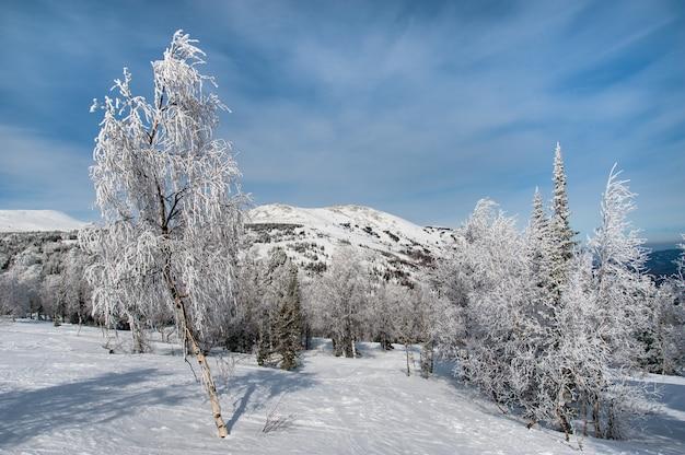 Paisagem bonita do inverno na floresta