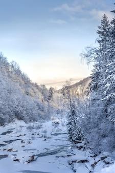 Paisagem bonita do inverno nas montanhas com pinheiros sob a neve.