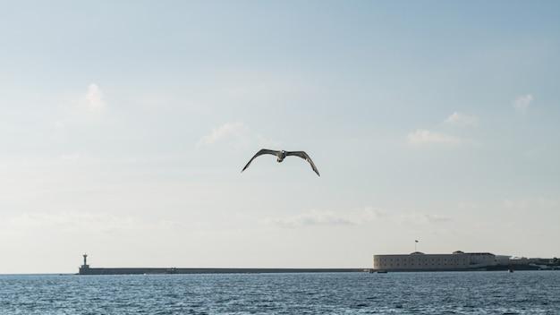 Paisagem bonita do oceano com gaivota