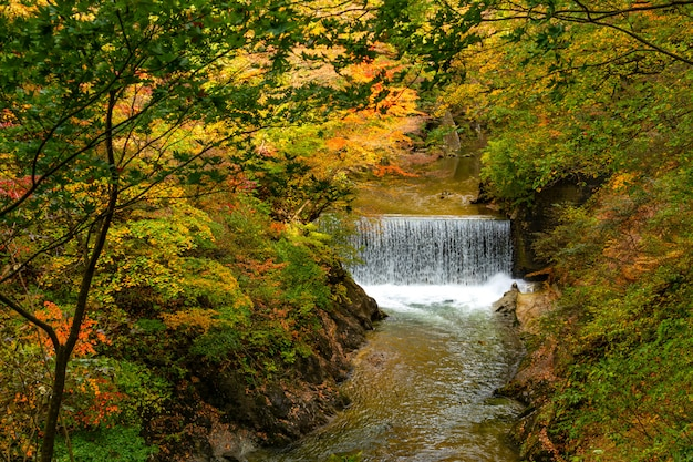 Paisagem bonita no desfiladeiro de naruko com a folha colorida da estação do outono e o fluxo do córrego natural claro na cidade de naruko, miyagi prefecture, japão.