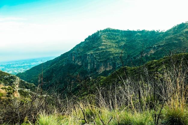 Paisagem branca branca ensolarada colina verde