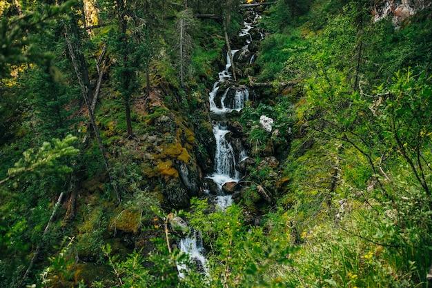 Paisagem cênica com bela cachoeira na floresta entre a rica vegetação.