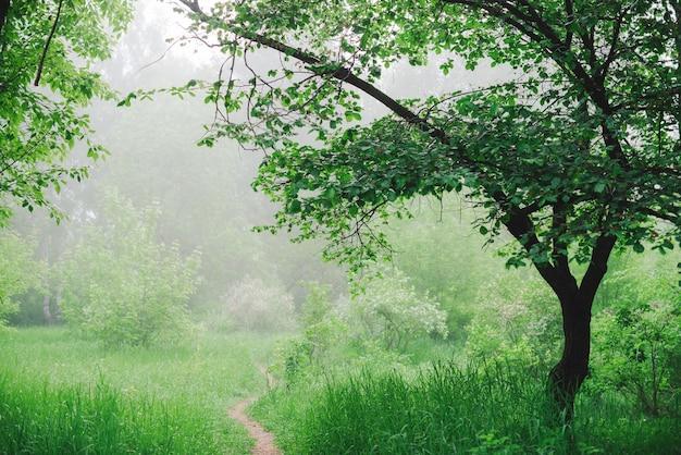 Paisagem cênica com belas árvores verdes exuberantes e nevoeiro.