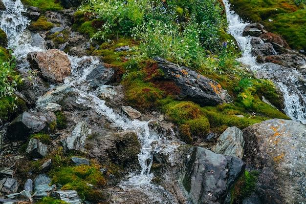 Paisagem cênica com fluxo de água de nascente transparente entre musgo espesso e vegetação exuberante.