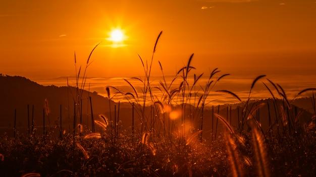 Paisagem, colorido, em, manhã, tempo, sobre, amanhecer, e, névoa, fundo, e, primeiro plano, grama, silueta