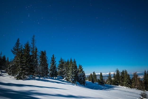 Paisagem com altos pinheiros crescendo entre montes de neve branca