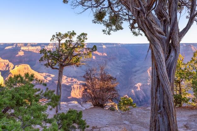 Paisagem com árvores em um penhasco contra o grand canyon sob os raios do sol nascente
