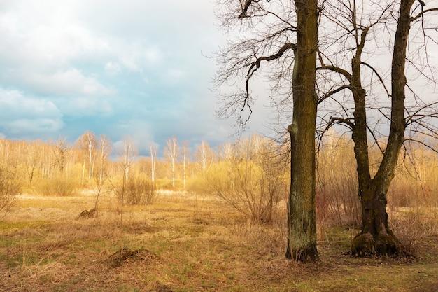 Paisagem com campo amarelo e árvores sob o céu azul nublado, árvores sem folhas em primeiro plano.