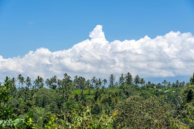 Paisagem com campos verdes, palmeiras e nuvens brancas no céu azul em um dia ensolarado na ilha de bali, indonésia