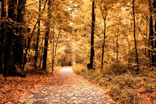 Paisagem com estrada com folhas caídas no outono amarelo park