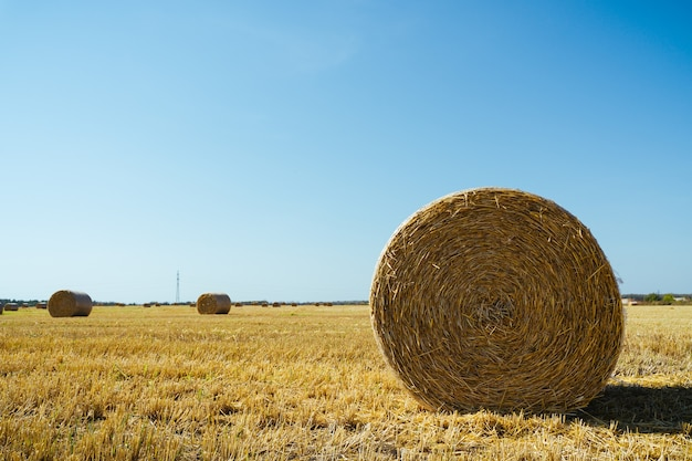 Paisagem com fardos de palha no campo agrícola.