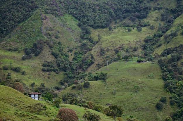 Paisagem com fazendas de café. colômbia.