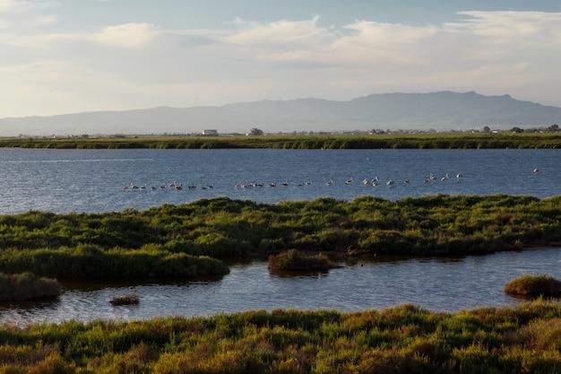 Paisagem com flamingos