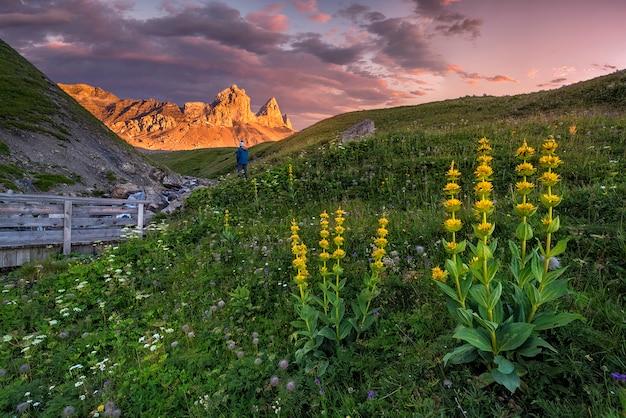 Paisagem com flores em primeiro plano e montanhas croix de fer em segundo plano nos alpes franceses