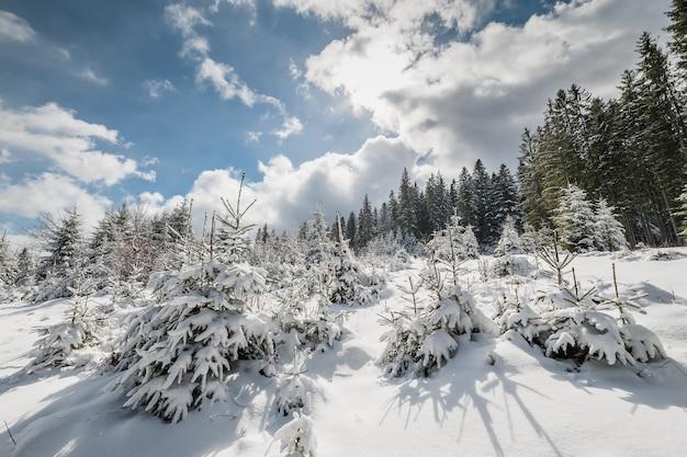 Paisagem com floresta de neve, cauda de fada do inverno