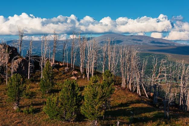 Paisagem com floresta morta no desfiladeiro, altura superior a 2.000 metros, nas montanhas de altay