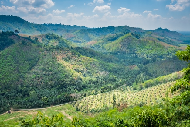 Paisagem com montanhas cobertas com floresta tropical