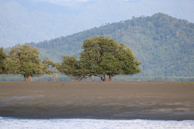 Paisagem com natureza árvore bonita forma e luz do dia em ranong tailândia