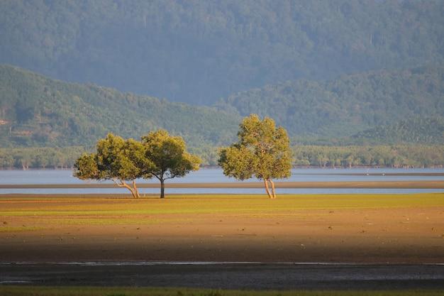 Paisagem com natureza árvore bonita forma e luz solar suave no entardecer ranong tailândia