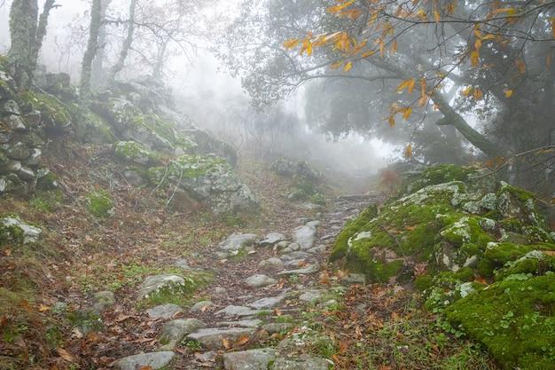 Paisagem com nevoeiro perto de montanchez. extremadura. espanha.