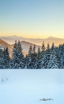 Paisagem com pinheiros de abeto, céu azul com luz do sol e montanhas altas