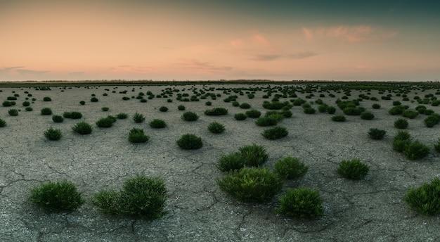 Paisagem com terra seca e plantas jovens, terra rachada no fundo seco do lago, deserto. estilização retrô, filtro de filme vintage
