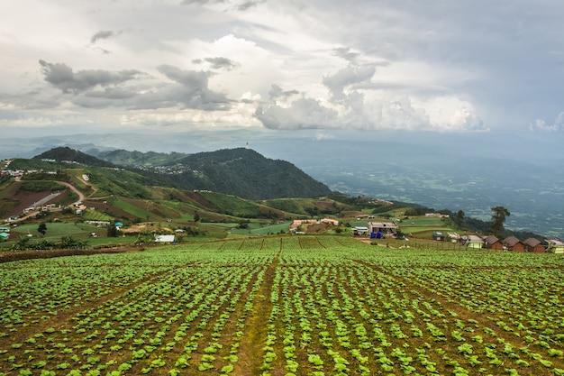 Paisagem da área agrícola na montanha na tailândia