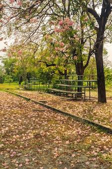 Paisagem da árvore e antiga arquibancada ao lado do campo