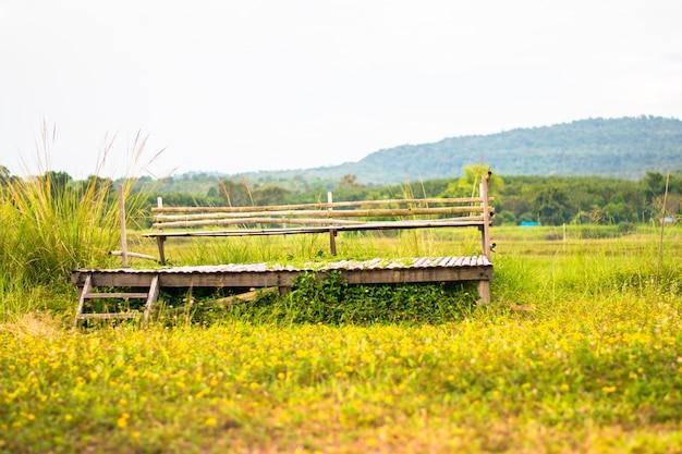 Paisagem da cadeira de madeira no campo de flores amarelas