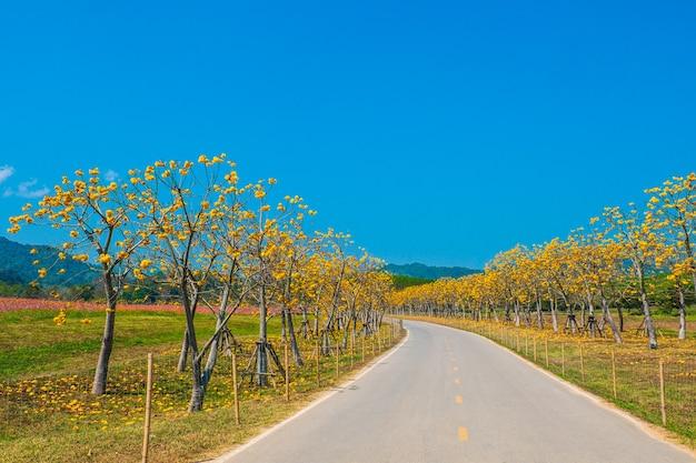Paisagem da estrada e flores amarelas bonitas no céu azul.