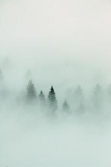 Paisagem da floresta com denso nevoeiro
