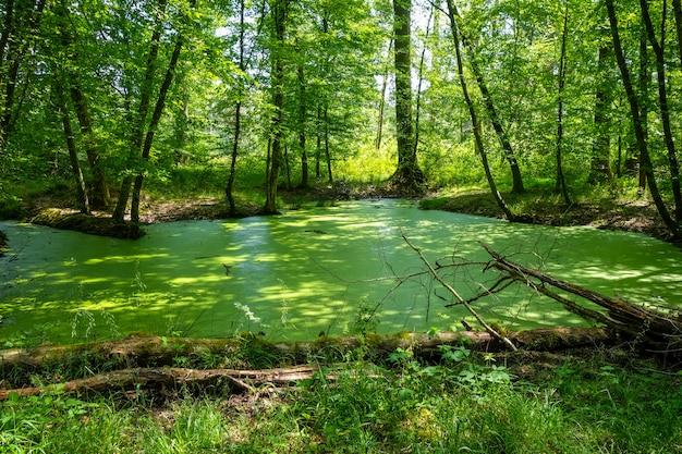 Paisagem da floresta de fontainebleau, frança