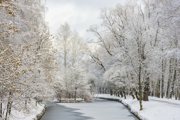 Paisagem da floresta de inverno. árvores sob uma espessa camada de neve. rússia, moscou, sokolniki, parque