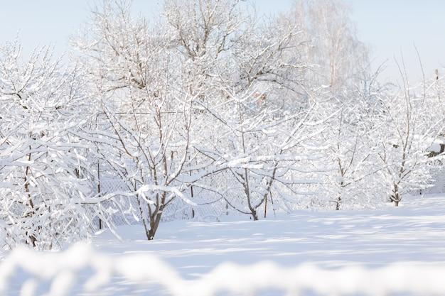 Paisagem da floresta de inverno com neve nos galhos de árvores