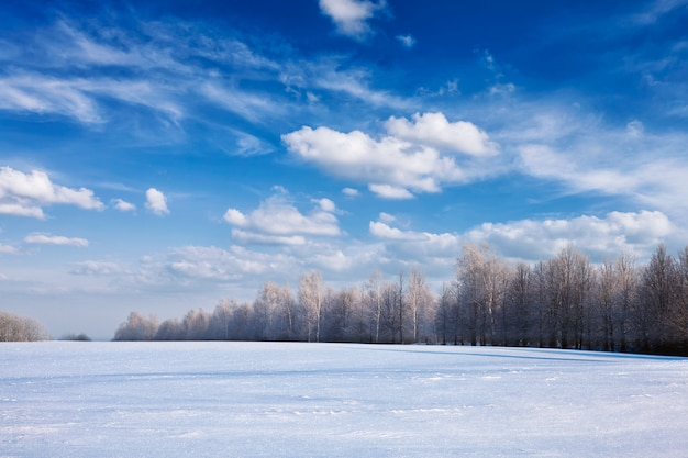 Paisagem da floresta de inverno com neve