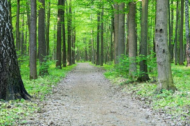 Paisagem da floresta de manhã