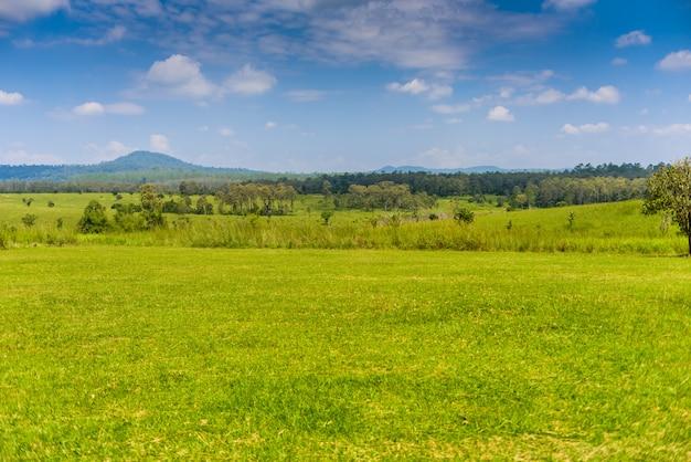 Paisagem da floresta de savana e montanha com um céu azul e nuvens brancas na primavera