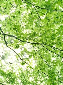 Paisagem da floresta floresta espaçosa verde