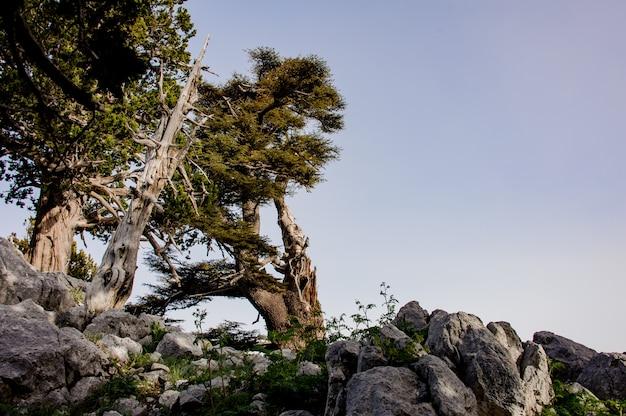 Paisagem da floresta nas terras altas da turquia