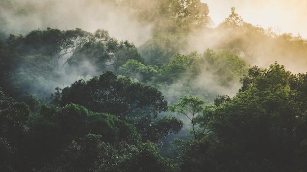 Paisagem da floresta tropical, floresta cênica com árvore da selva na natureza verde, bela planta de folhagem de madeira selvagem sobre a montanha, folha com água da chuva, plano de fundo do parque ambiental para viagens