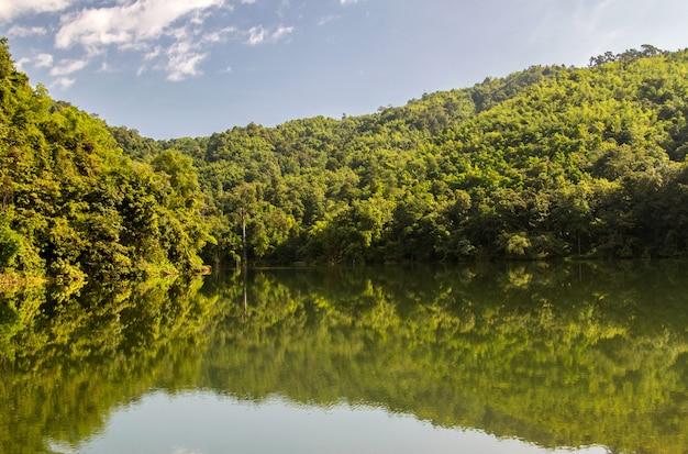 Paisagem da floresta verde e lago