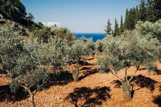 Paisagem da ilha de zakynthos