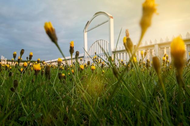 Paisagem da islândia com lindas flores no jardim