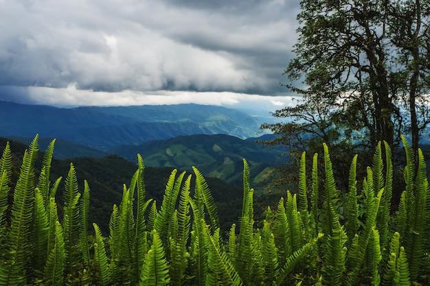 Paisagem da montanha na província de nan tailândia