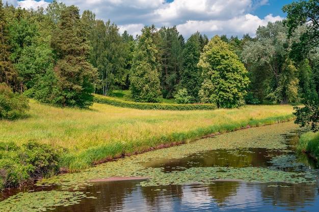 Paisagem da natureza do campo verde verão. paisagem verde da natureza. bela paisagem natural colorida de verão primavera com rio no parque cercado por folhagens verdes de árvores