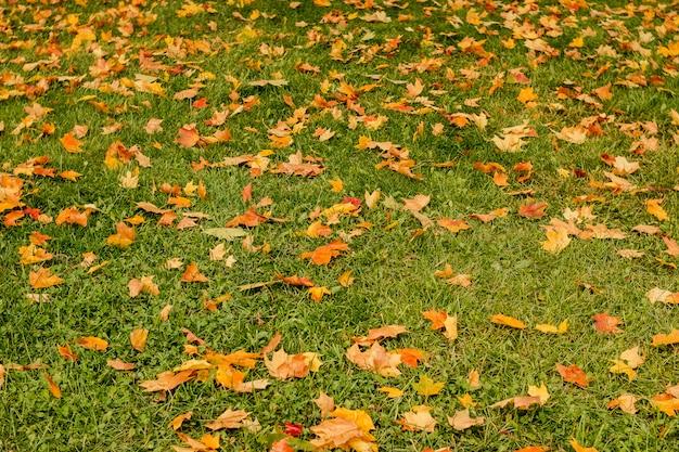 Paisagem da natureza - parque do outono dentro com as árvores douradas do outono no tempo ensolarado, paisagem pitoresca do outono do parque sob a luz ensolarada da noite.