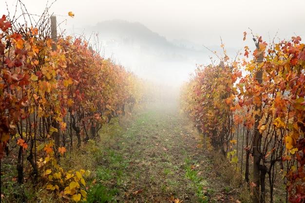Paisagem da região vinícola de barolo