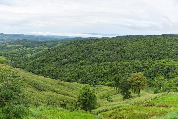 Paisagem da tailândia com árvore na montanha - paisagem da agricultura na ásia